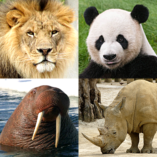 Animals Quiz – Learn All Mammals and Dinosaurs!
