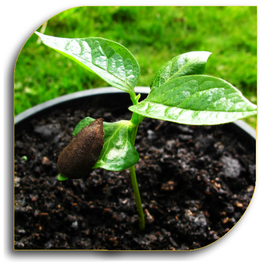 Seeds – Planting (Guide)